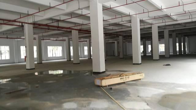 平湖平龙路大水坑收费站全新厂房5万平方米独院或分栋出租-图3