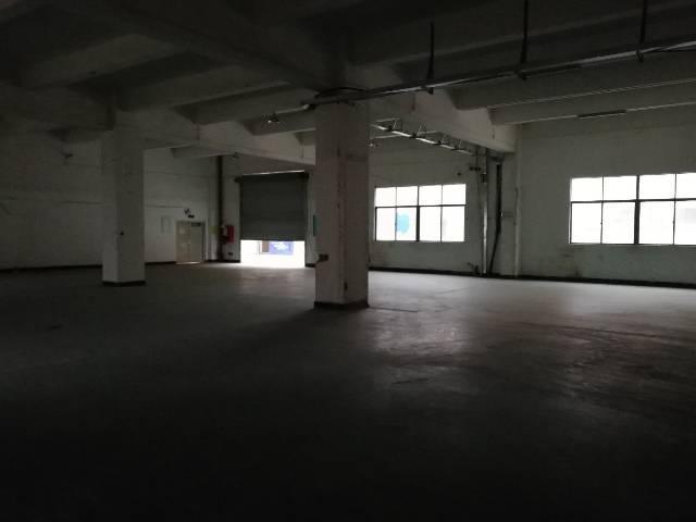 观澜福民新出一楼1500平方层高5.5米-图3