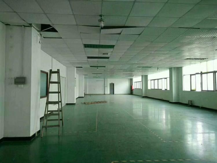 坑梓金沙新出一楼1500平米整层带装修出租-图2