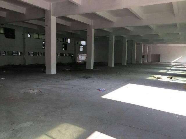 清溪靠塘厦横塘新出标准一楼2000平米大小分租