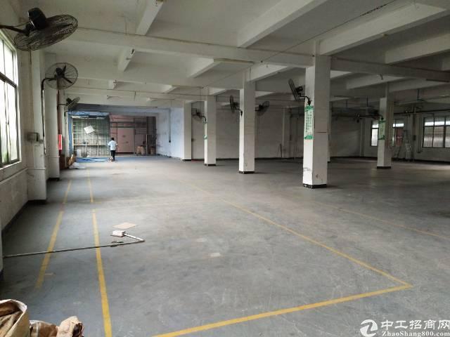 黄江镇板湖村新出一楼1500平米标准厂房一楼-图3