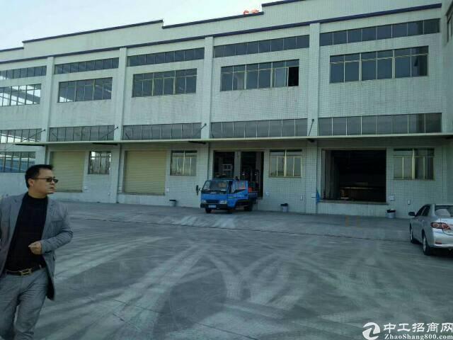 虎门树田1450平方钢构厂房出租,滴水9米高,带办公室装修