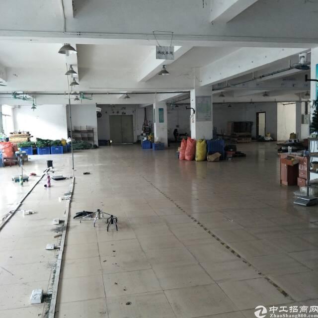 企石新出原房东标准厂房一楼800平方(空地大可独立使用)