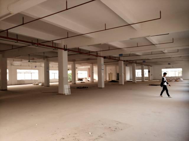 金凤凰全新1楼350平21块,6.5米高,主干道旁