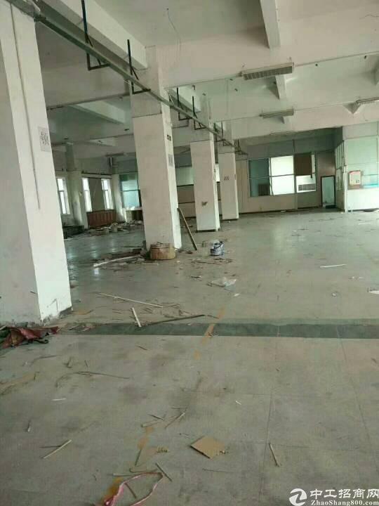 松岗燕川一手房东,新出厂房1楼1500平方,面积实在,高6米