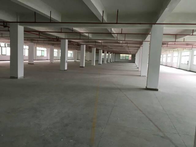 广州市新出原房东厂房出租