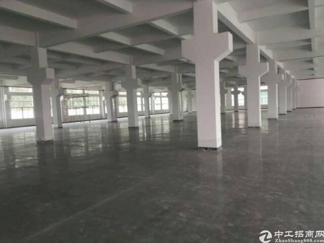 广州新塘全新独栋厂房8400平方招租可分租-图5