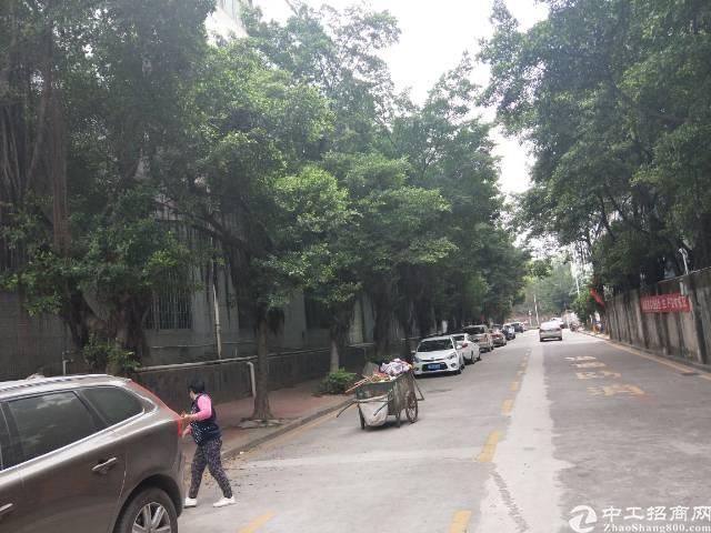 龙华清湖地铁口,花园式厂房出租