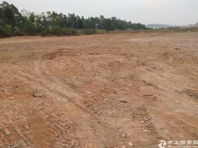 江门带红本地皮200亩出售