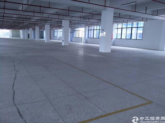 坪山高速出口七万平工业园整体招租可分租-图3