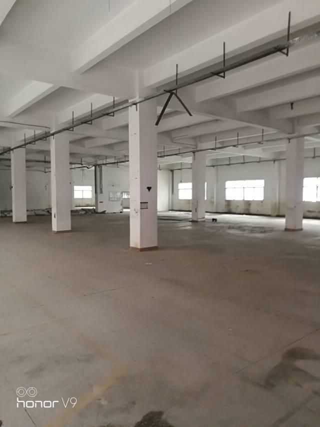 公明蒋石经典独院厂房低价招租-图2