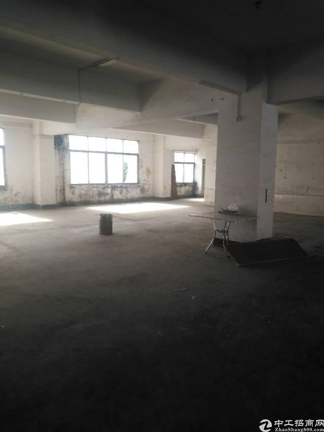 横岗大康沙河路边大型工业园区新出一楼厂房招租-图2