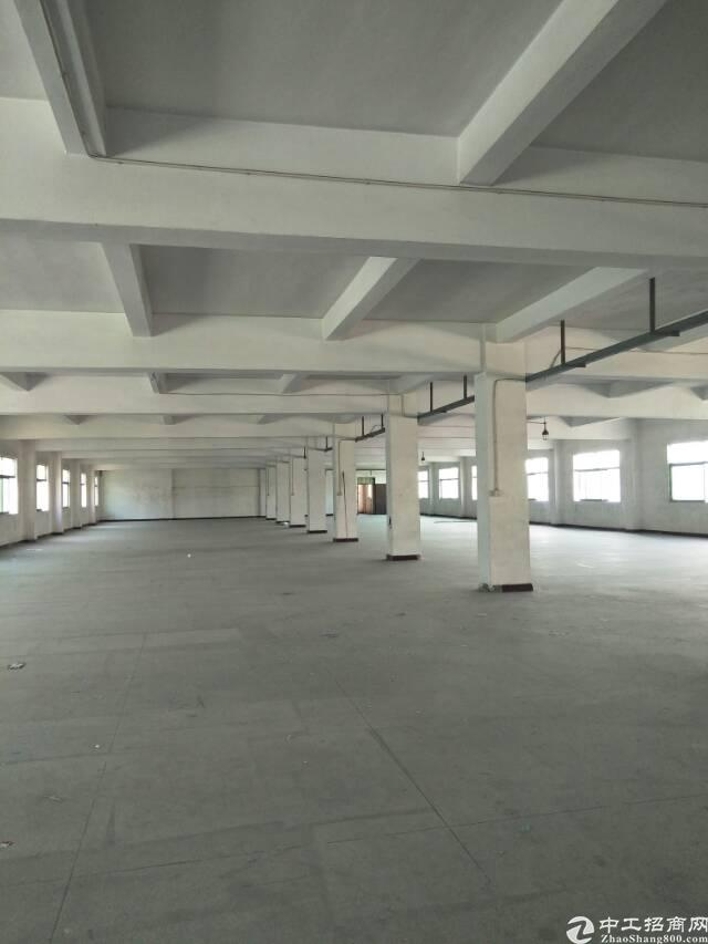 塘厦石鼓新出楼上1200平方,中间一排立柱全新电梯可做仓库