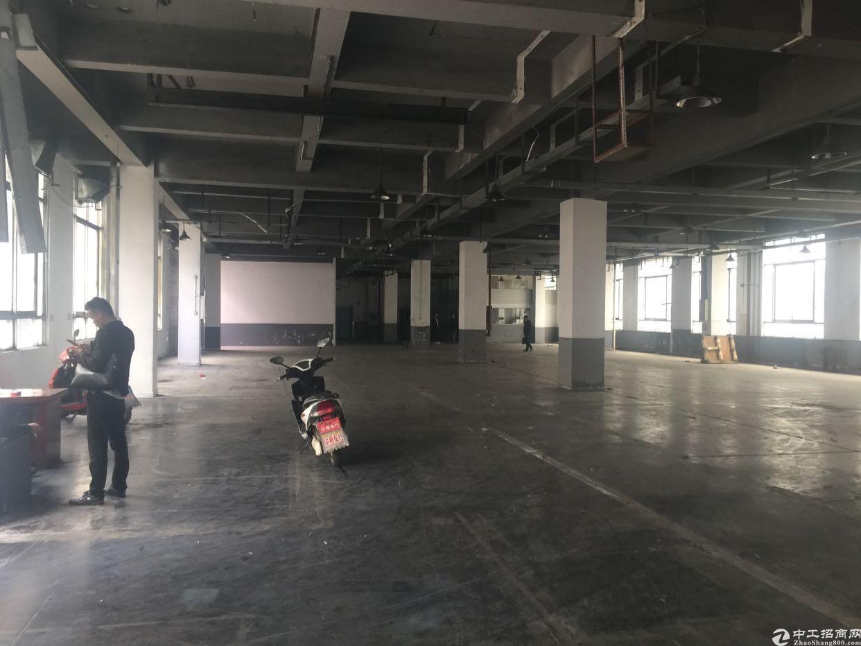 光明新区松白路边成熟工业区一楼1400平方带消防喷淋