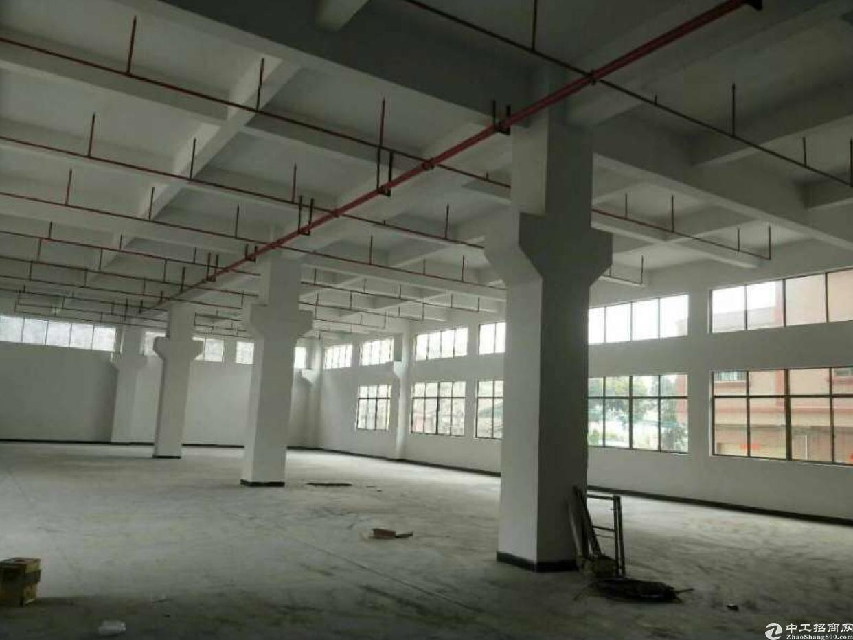 虎门赤岗标准厂房一楼2000平方出租、一楼6米高
