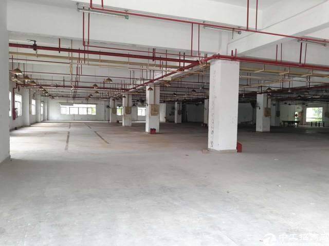 油松新出厂房一楼,面积2700平,带消防喷淋