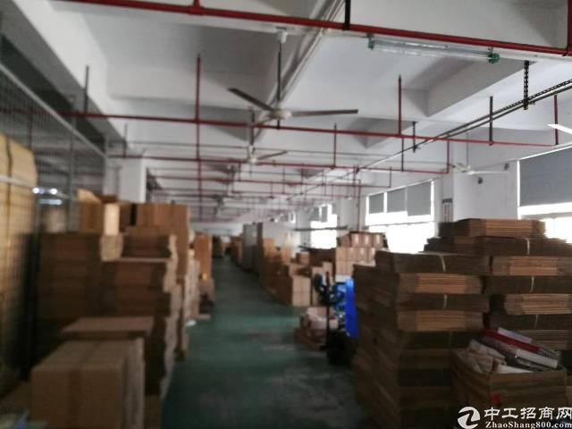 红本厂房南光高速出口李松朗5楼3300平方精装修-图2