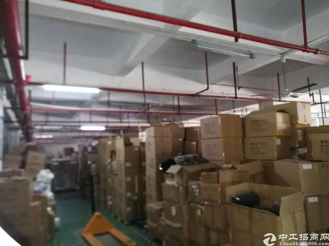 红本厂房南光高速出口李松朗5楼3300平方精装修-图3