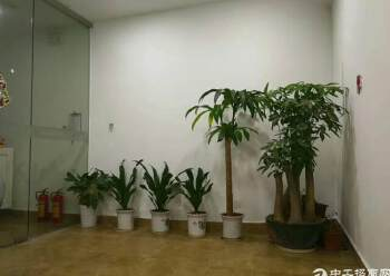 清湖地铁口600米政商中心环境舒适280平图片1