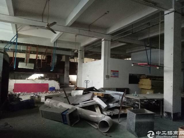 谢岗镇新出一楼标准厂房700平-图2