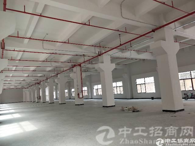 大坪新建标准五层厂房,2250平/层