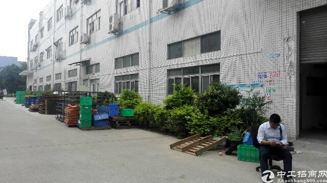 沙井共和工业区一楼新出1250平方厂房出租