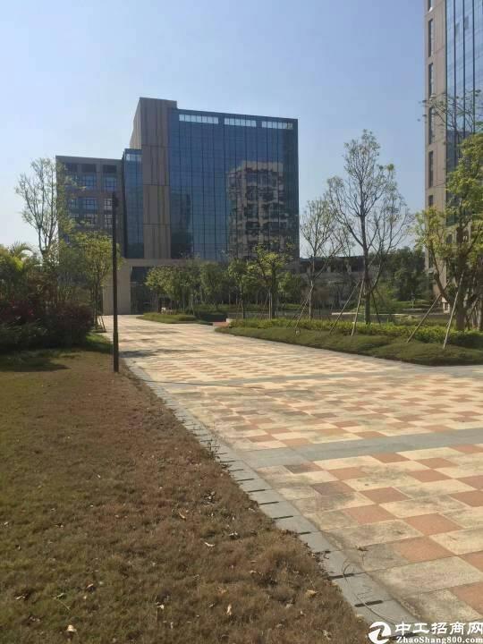 布吉原房东可租可卖16万平方可做酒店医院公寓企业总部等6