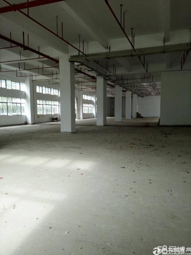龙岗 原房东独院厂房5000平方实际面积出租,电8毛!