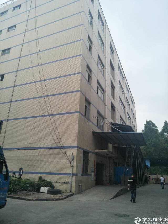 水田新出楼上1100出租两层,可分租-图2