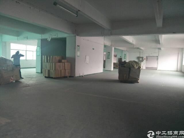 水田新出楼上1100出租两层,可分租-图3
