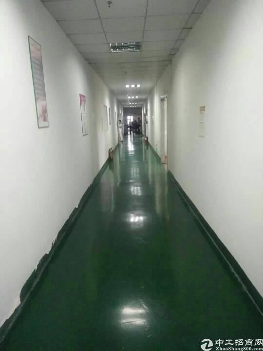 光明新区原房东独院红本厂房招租5500-图3
