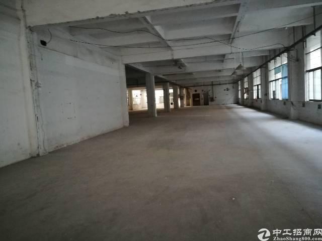石排镇精品独院厂房出租,厂房两层4600平方,一楼5.5米高-图4