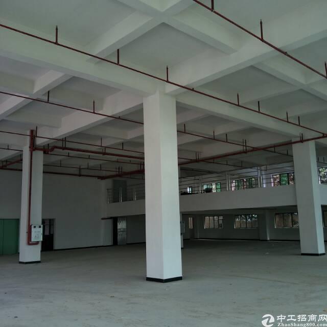 全新标准厂房分租一楼1300平方(带消防喷淋及办公室)