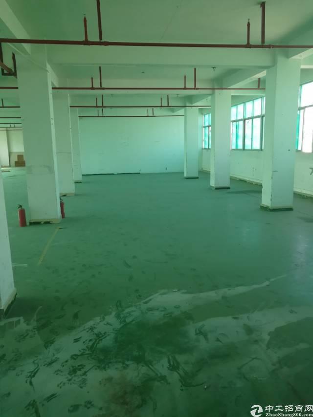 龙华大浪商业中心新出豪华装修厂房1100平