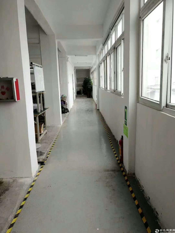 松岗街道楼岗村2楼500平方全新豪华装修带2吨货梯整层好用