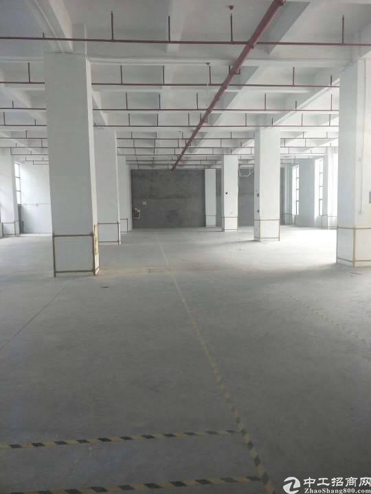 福永沿江高速出口原房东12000平红本厂房出租(可分层租)-图2