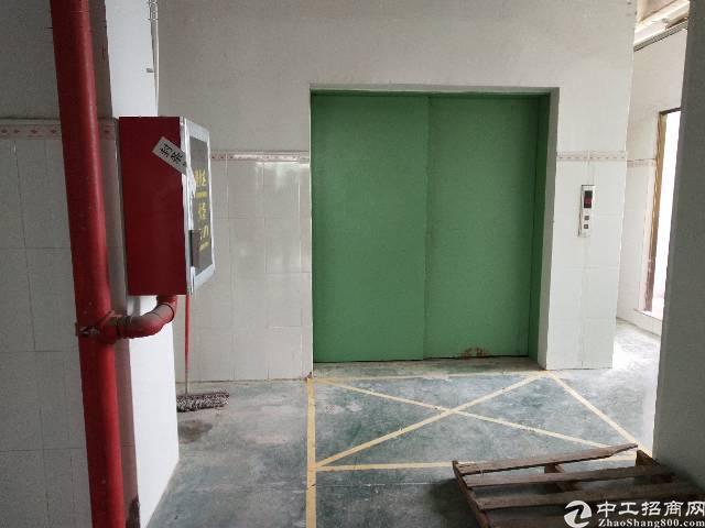 整层500平 实际面积  带消防喷淋 三吨标准货梯 原房东厂