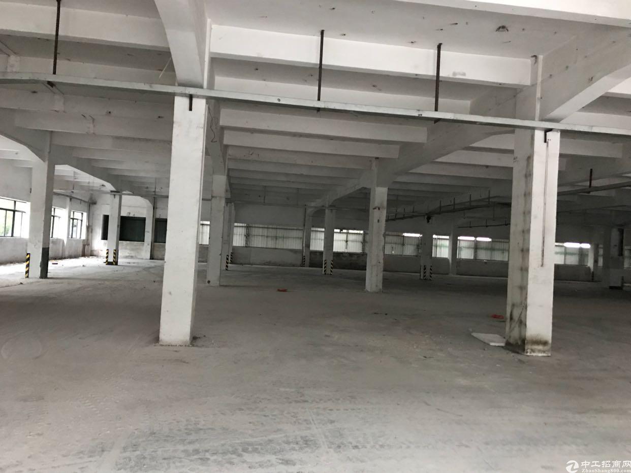 石碣镇中心城区新出独院厂房分租一楼1000-图2
