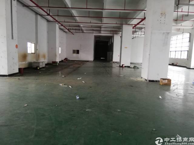 公明新出一楼2500平米厂房-图3