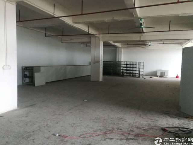 石排镇标准厂房三楼分租600平方出租