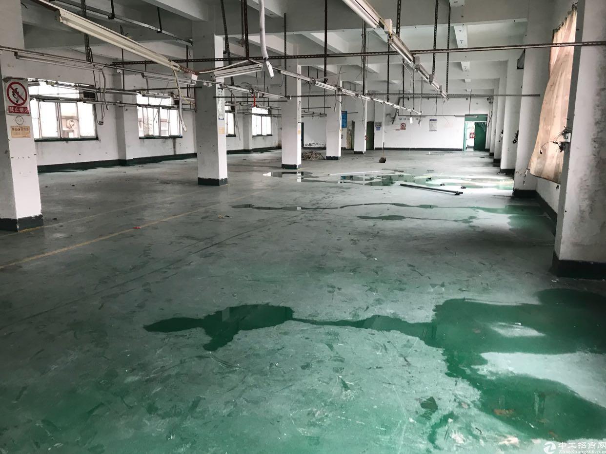 横岗安良社区,新出独栋厂房,5300平方米-图8