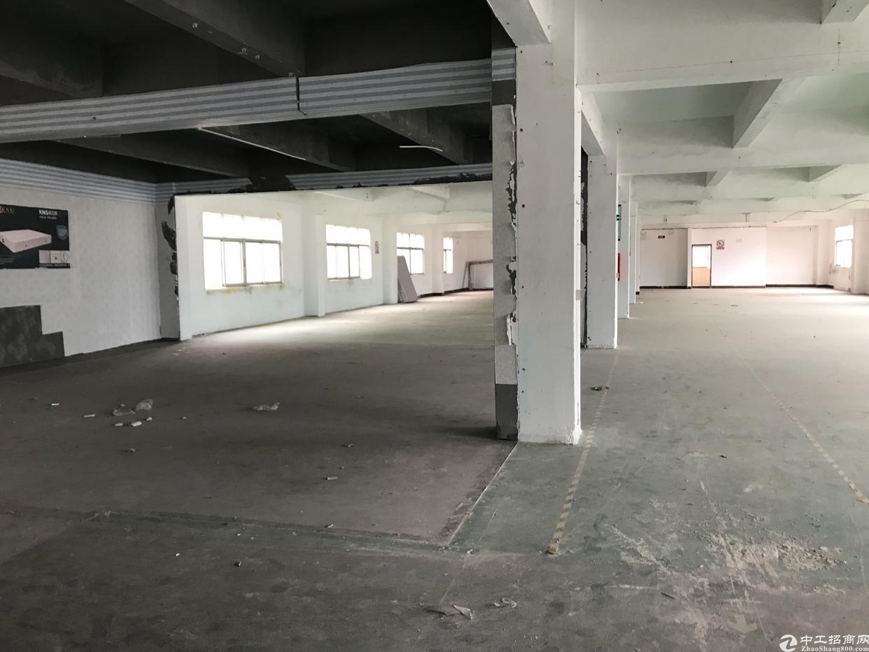 横岗新出独栋厂房出租2300平方米-图3