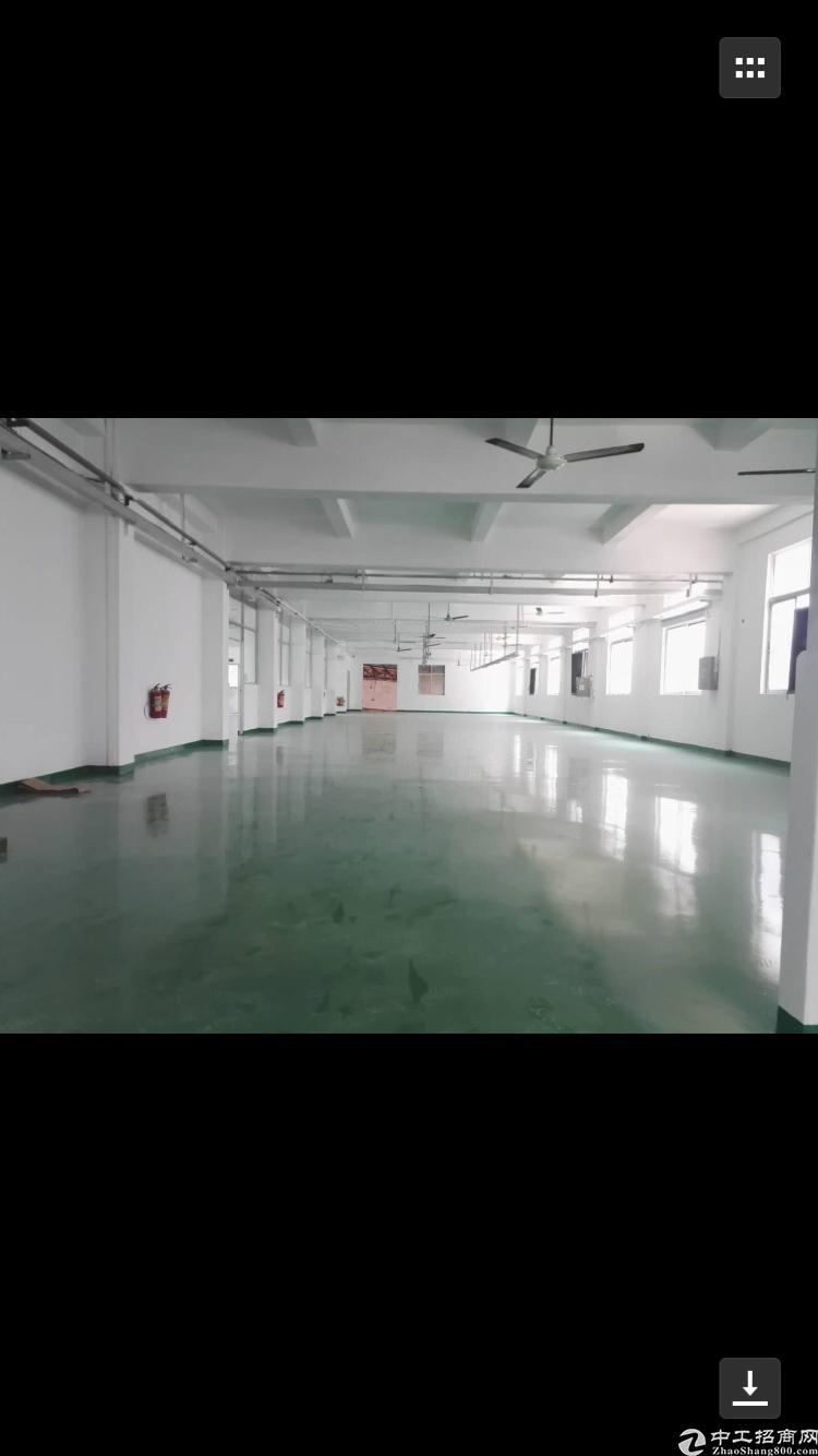 (出租)坪山碧岭1350平米真实标准1楼厂房出租高5米