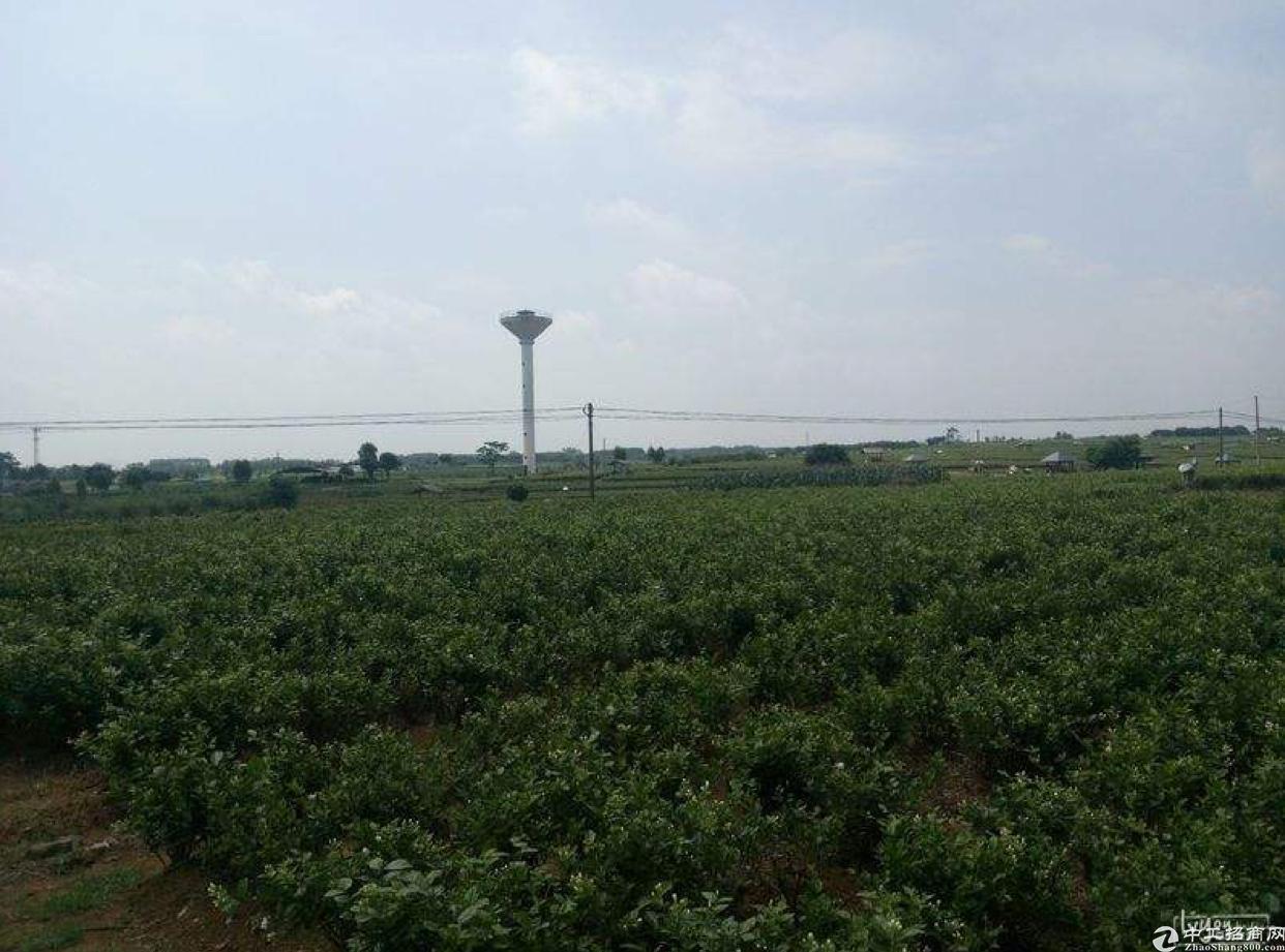 江门江海国有证土地出售厂房出售