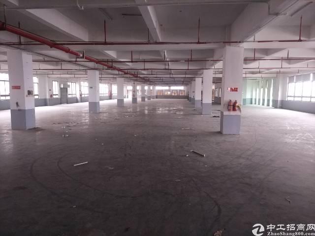松岗罗田新出独院厂房35000平方米有红本原房东低价招租-图4