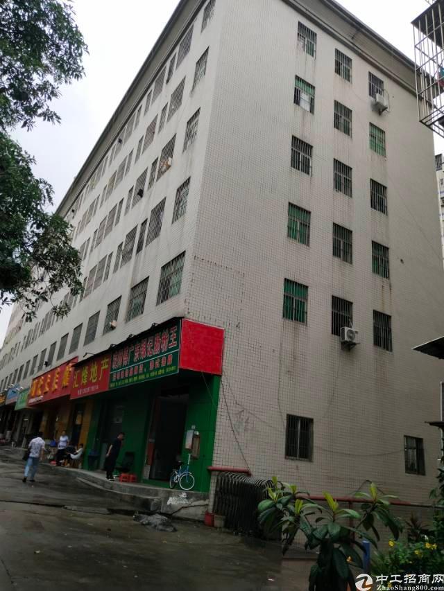 观澜新田创新工业园旁边新出整栋公寓楼出租