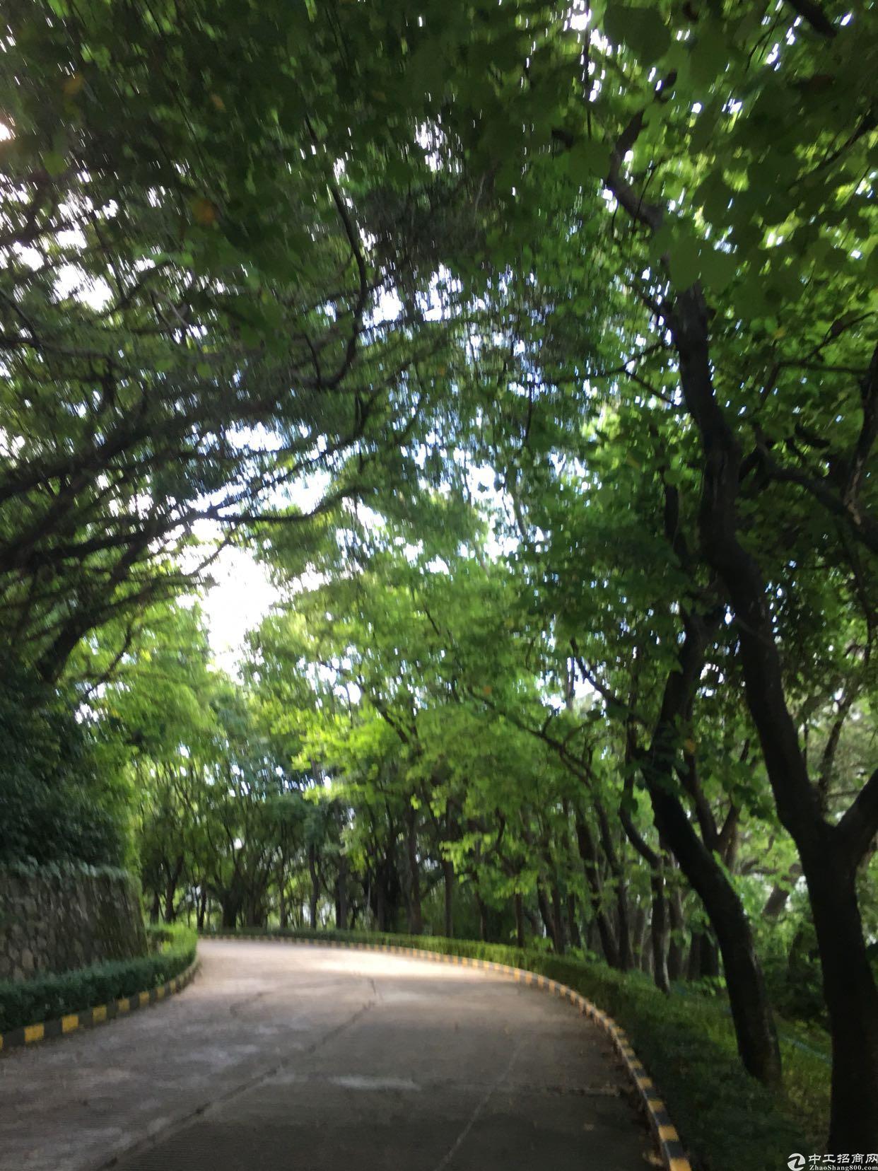坂田雪象医院附近带装修独栋厂房15000平方大小可以分租