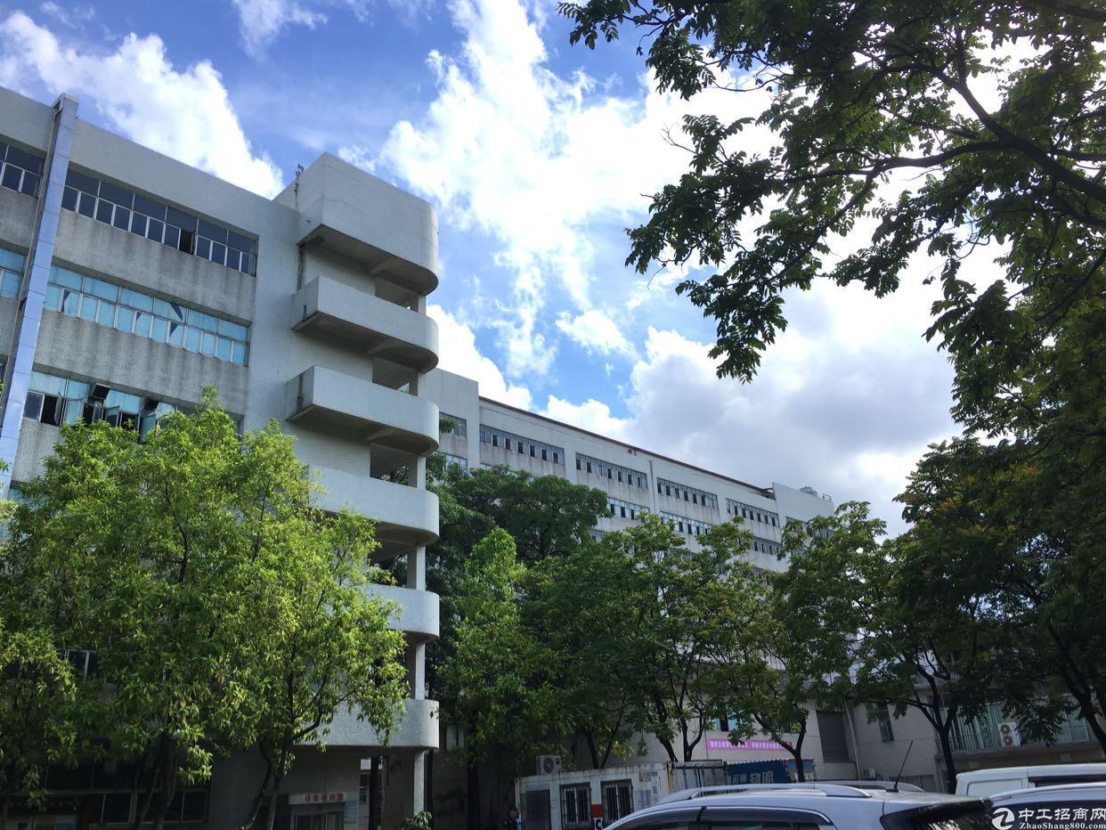 布吉木棉湾地铁站附近红本独院厂房50000平方大小分租