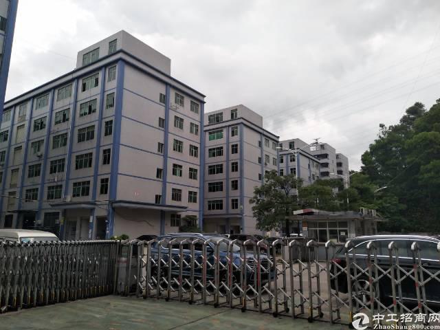 坂田上雪科技园新出一楼带装修400平厂房出租
