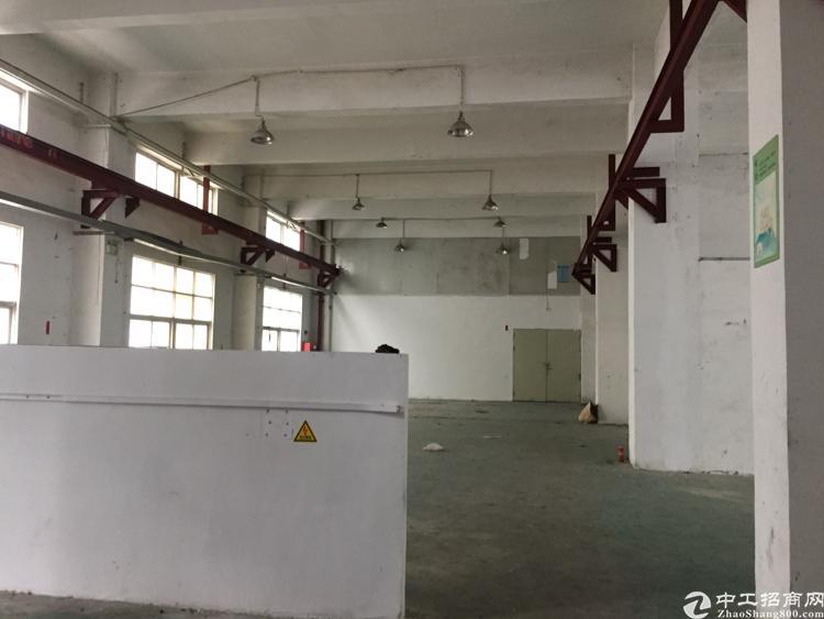 龙岗坪地坪一楼600平标准厂房高6米